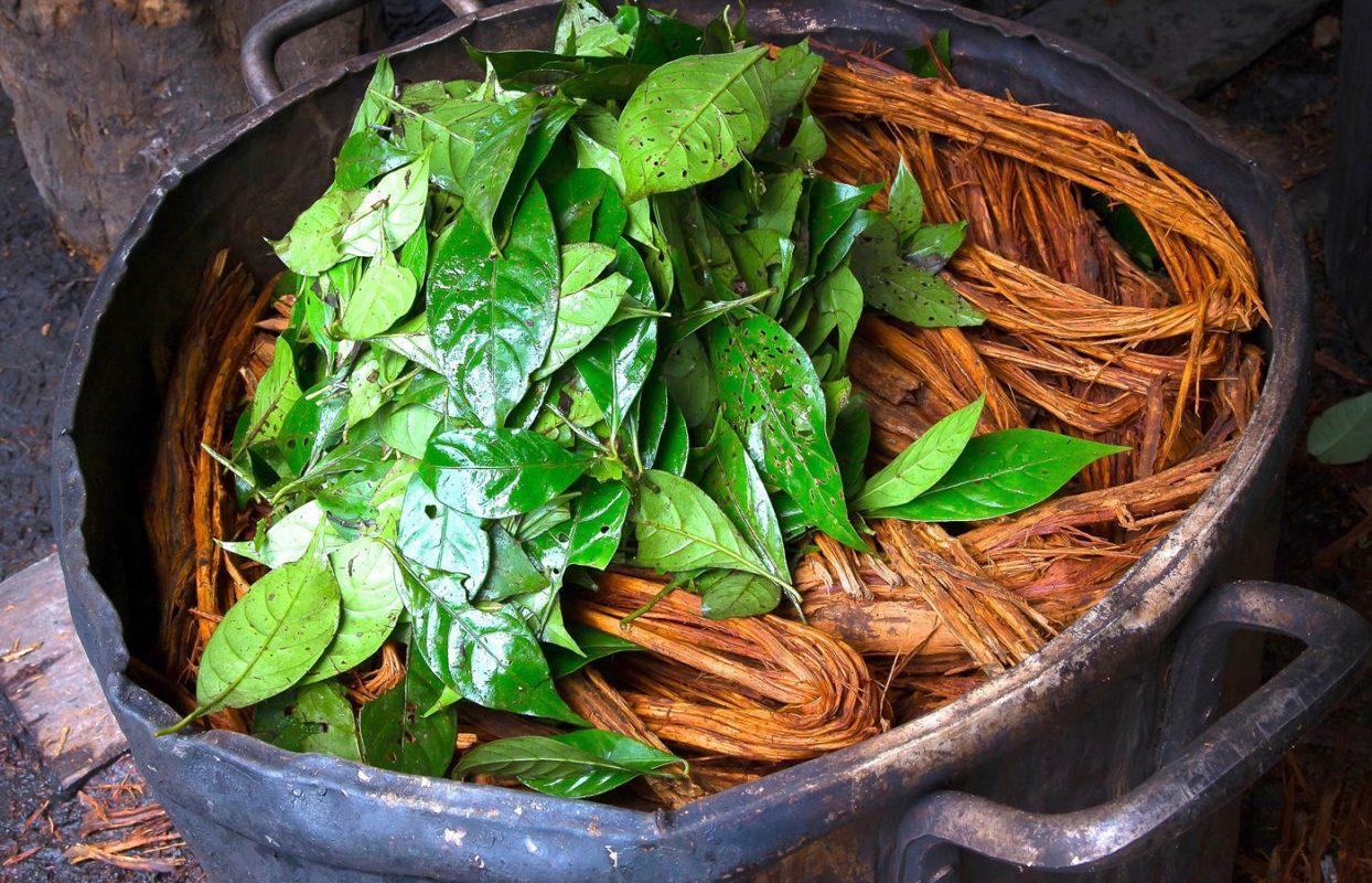 ayahuasca retreat usa