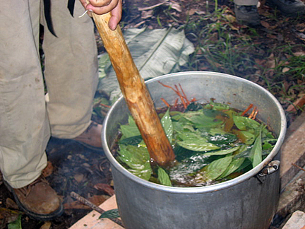 What is Ayahuasca